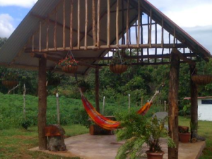 Outdoor Social Area with Hammock and Plants