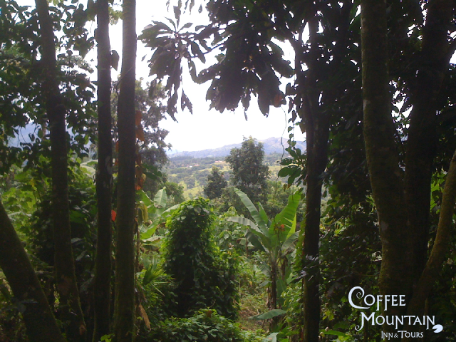 Views from El Pantano, Coffee Tour