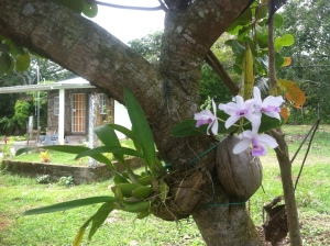 Coffee Plantation Vacation Rental